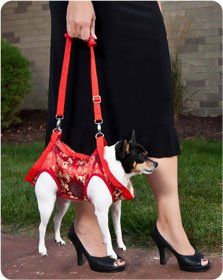"WTF. I understand a Purse that carries your dog...but not turning your dog into a PURSE! ""Dog Harness Vest (Red with Gold Brocade): Pet Supplies"""