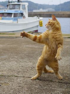 Japanese Photographer Documents Cats Practicing Their Ninja Skills - World's largest collection of cat memes and other animals Funny Cats, Funny Animals, Cute Animals, Animals Images, Wild Animals, Baby Animals, Gatos Cool, Ninja Cats, Dancing Cat