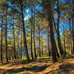 Walking the dogs in the forest this afternoon. El Chorro forest is simply gorgeous and the colours coming through the trees in the late afternoon sun are beautiful. . . #struthadventures #theolivebranchelchorro #elchorro #andalucia #spain #mountains #mountainlife #walking #hiking #location #forest #mountainslovers #mountainsarecalling #afternoonsun #summer #greatview #sunnydays #trees #nature #naturephotography #nofilter #travellingtheworld #travel #globetrotter #wanderlust #goodtimes…