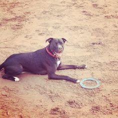 Bubz my boxer cross patterdale terrier. Love him x