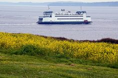 Whidbey Island Ferry just off of Fort Casey State Park WA. Amazing Photos, Cool Photos, Northwest Usa, Oak Harbor, Port Townsend, Ferry Boat, Oregon Washington, Whidbey Island, San Juan Islands