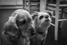 The Pups by Anna Ritson - Photo 145179983 - 500px