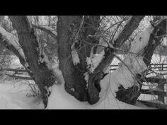 "nice ""Walking in Snow"" Mini-Film by Mark Mosher VST Free Download Crack"