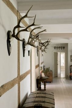 Antlers are in... at least :-)  So much better with out the face staring at you!  European mounts!  YES!