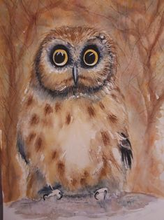 Little owl Original watercolour painting. 21 x 30 cm Owl Pictures, Little Owl, Owl Art, Watercolour Painting, Original Artwork, Art Ideas, Photo Galleries, Wildlife, Ink