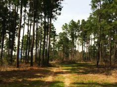 18 Acres in Leon County, Texas - Property - LandAndFarm.com - Land for Sale