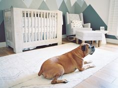 boxer pet in a modern nursery with mountain mural - Melissa Jill Photography