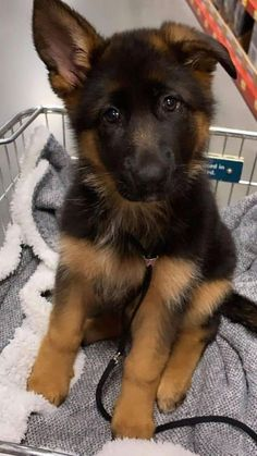 Cute Small Dogs, Cute Baby Dogs, Cute Little Puppies, Cute Dogs And Puppies, Cool Pets, Doggies, Adorable Cute Animals, Cute Baby Animals, Animals Beautiful