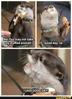 otter with stuffed otter says good day - Google Search