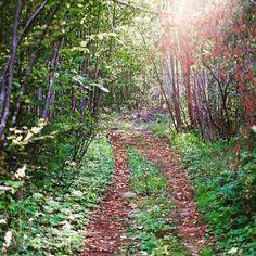 Let's take your own path!  Photo: @nikokebek  #UTHC #freeyourwild #trailrunning #ultratrailrunning #getoutside #adventuretime #ultratrailrun #ultratrailrunner #charlevoix #moncharlevoix #quebecoriginal by uthc