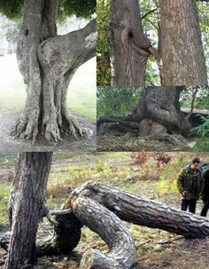 Oh nature Ok that's some erotic trees Amazing Nature, Amazing Art, Funny Images, Funny Pictures, Filthy Memes, Funny Vegetables, Weird Trees, Unique Trees, Funny Cute