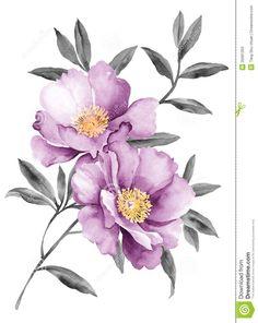 Акварели иллюстрации цветы