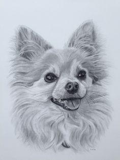 "Pencil Drawings Tutorials ""Peanut"", 11 x 14 pencil drawing Pencil Drawings Of Animals, Animal Sketches, Cute Drawings, Funny Dog Faces, Funny Dog Videos, Chihuahua Art, Puppy Drawing, Dog Portraits, Dog Art"