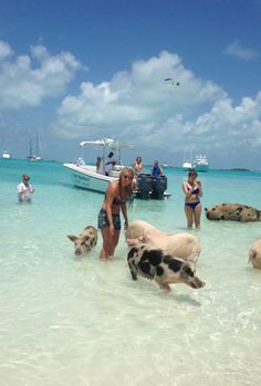 Did you know there's an island in the Bahamas where you can swim with pigs?