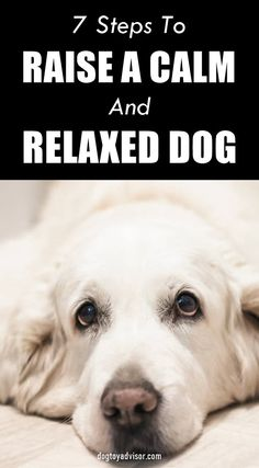 Relaxed Dog, Easy Pets, Dog Health Tips, Dog Potty, Cockapoo Dog, Goldendoodles, Best Dog Training, Dogs And Puppies, Doggies