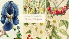 Free Printable Natural History Posters Of Adolphe Millot - Picture Box Blue Vintage Botanical Prints, Vintage Maps, Vintage Prints, Vintage Sheets, Vintage Clip, Botanical Art, Vintage Posters, Printable Flower Pictures, Peony Painting