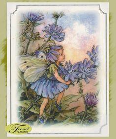 Folienpostkarte Flower Fairies Wegwarte
