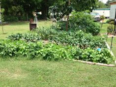 It's not too late or too hard to find  few places in your yard where you could put a garden? Here's one from Urban Homstead houston https://www.facebook.com/pages/Urban-Homestead-Houston/569012743109282