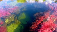 The River Of Five Colors – Cano Cristales