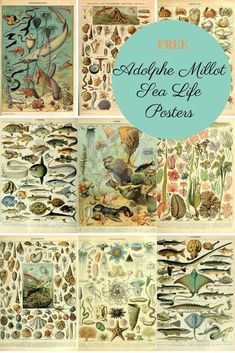 A comprehension collection of fabulous vintage sea life posters by the French naturalist and painter Adolphe Millot. Free to print and download. #adolphemillot #sealife #naturalhistoryposter