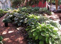 garden ideas under pine trees - Google Search