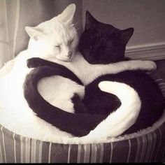 Black and white cats form a heart