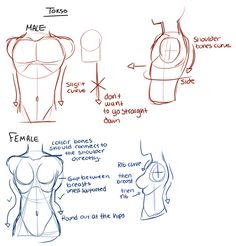 Drawing Tips - because I am terrible at drawing the male figure