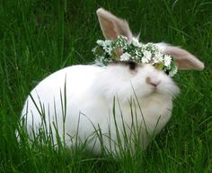Pretty white bunny wearing a flower crown Baby Bunnies, Cute Bunny, Cutest Bunnies, Cutest Pets, Hunny Bunny, Hamsters, Baby Animals, Cute Animals, Rabbit Pictures
