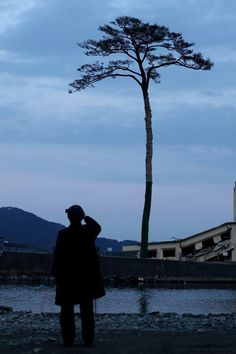 Miracle tree--   known as miracle solitary pine tree in Japan, which survived after the March 11 tsunami hit the area, in Rikuzentakata, Iwate prefecture, in this photo taken by Kyodo on December 10, 2011. REUTERS/Kyodo              A man takes a picture of the single pine tree left standing after last year's March 11th tsunami, which swept away an entire forest in the city of Rikuzentakata on March 11, 2012 in Rikuzentakata, Japan.