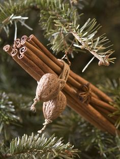 Winter ~ Advent ~ Week Tree: The Light of Bird & Beast ~ Cinnamon Walnut Bundles ~ Secure several long cinnamon sticks in a bundle with an elastic band. Attach a walnut at either end of thin rope, wrap the rope around the sticks and glue on a star anise. ~ Step-by-step instructions here: http://www.hgtv.com/handmade/cinnamon-spice-bundle-christmas-tree-ornaments/index.html