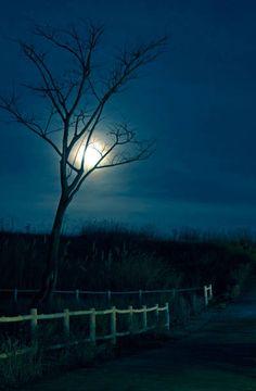 horror night scene