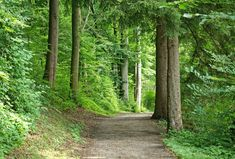 Eventbrite - Alicia presents Earth Day Forest Bathing In Mt. Tabor Park - Saturday, April 2019 at Mount Tabor, Portland, OR. Bratislava, Pbs Space Time, Forest Bathing, Hiking With Kids, Walking In Nature, Earth Day, Trip Advisor, Nature Photography, Into The Woods