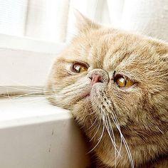 #pet #cute #cat #bewithu #purple #tabby #kitty... Follow us on Instagram :D #cats #cat #catlover #lovecats #funny #fun #cute #socute #feline #felines #felinefriend #fur #furry #paw #paws #kitten #kitty #kittens #kittycat #kittylove #fluffy #fluff