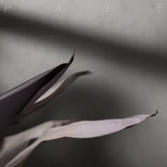Single Serving: Pale. – Comeback EP | Turntable Kitchen