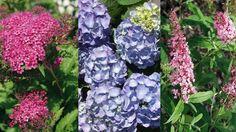 právny čas rezu je krátko pred začiatkom vegetácie, teda vo februári alebo marci Teraz, ešte predtým, ako im začnú rásť listy, je čas na rez všetkých krov, ktoré kvitnú v lete.