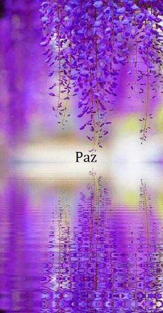"""purple wisteria reflection by JBot"" Beautiful flowers, beautiful photo. Purple Love, All Things Purple, Shades Of Purple, Purple Rain, Purple Stuff, Purple Ombre, Bright Purple, Beautiful World, Beautiful Places"