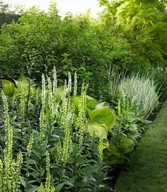 When all kinds of colors aren't fighting for your attention, you actually see contrasting shapes and textures. Verbascum chaixii; Hosta 'Sum and Substance'; Philadelphus coronarius 'Aureus'; and Iris pallida 'Variegata.'   - CountryLiving.com