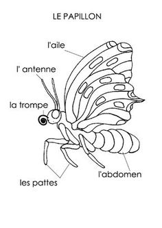 Fiche identité papillon. French Education, Kids Education, Science Art, Science Nature, 1 Gif, Kindergarten Science, Important Facts, Very Hungry Caterpillar, French Lessons