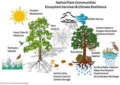 Overview Ecosystem Services & Nature Based Solutions - Native Plant Conservation Campaign Ecological Economics, Nitrogen Fixation, Human Well Being, Erosion Control, Community Activities, Green School, World Water, Soil Improvement, Single Tree