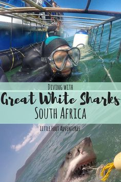 Diving with Great White Sharks in Gansbaai, South Africa