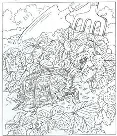 Turtle Ocean Sea Abstract Doodle Zentangle Paisley Coloring pages