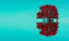 Tree reflect! by THOMAS Patrice