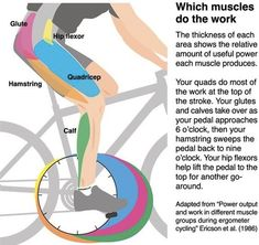 bicycle, spin bike, spinning, muscles