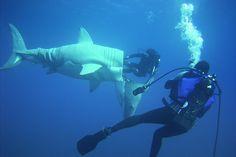 ¿Fabricar un submarino que parece un tiburón? ¿Vivir a 20m bajo el agua durante un mes? Él lo hizo.
