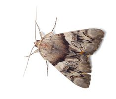 4 steps to get rid of moths: Get to the bottom of your insect infiltration. Getting Rid Of Moths, Insects, Butterfly, How To Get, Household Tips, Cleaning, Google Search, Moth, Butterflies