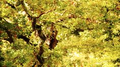 L'Arboretum de la Sédelle fête l'automne