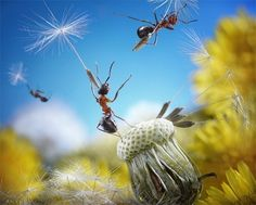 photographer Andrey Pavlov.  To get these shots, Pavlov patiently coaxes the ants into these poses with food. The pictures are staged, but there's no photomanipulation involved.