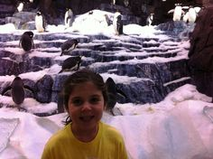 Check out all the photos our SeaWorld camper, Julia, took during her week at camp. #SeaWorld #camp #penguin