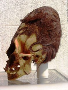 This seems obvious when you consider that the volume of some of these skulls has been found to be twice that of a normal human skull. These elongated skulls are not human by any stretch of the imagination; brain capacity cannot double in that many individuals unless it is a genotype, in other words, a genetic lineage that breeds true. A DNA test should be definitive, as long as we can trust the laboratory to be independent and allow full access to their research.