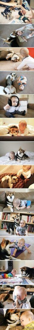 Baby and husky
